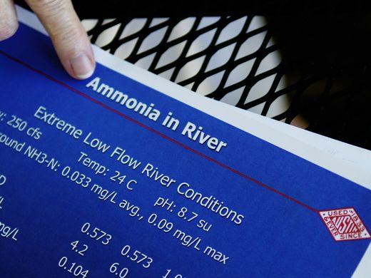Amonia in Nolichuky